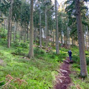 Aymon Trail : une première dans les Ardennes !